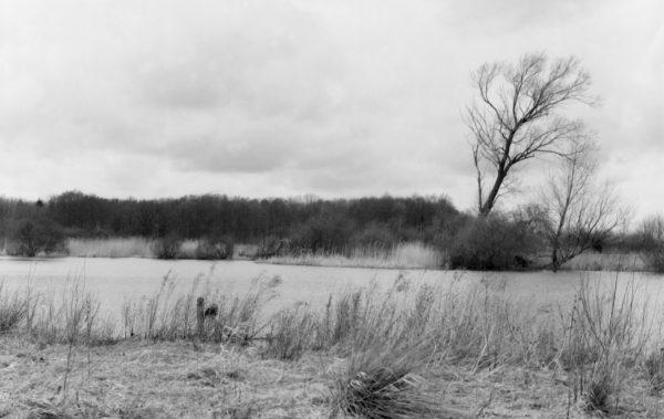 Moorlandschaft (Horreby Lyng)