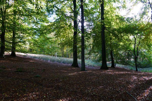 Im Wald von Halskov Vænge