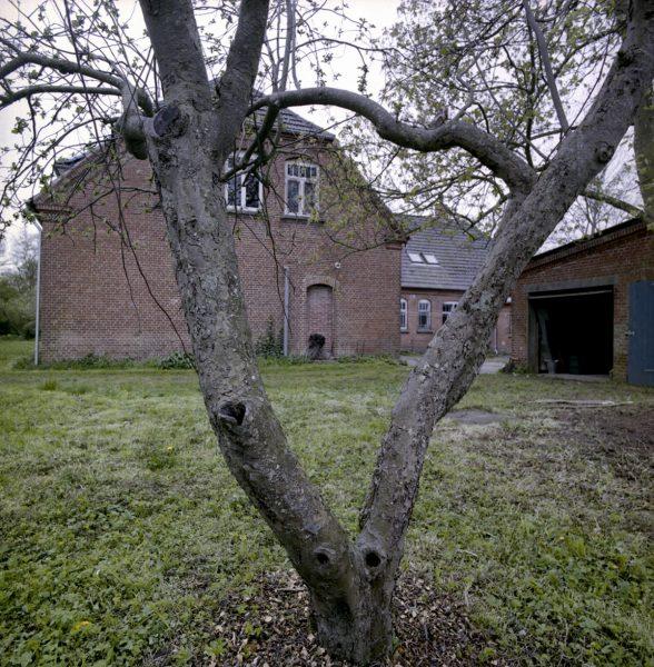Baum im Garten des Falsterhus in Dänemark
